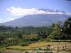 Bali_rice_terasse_2_red